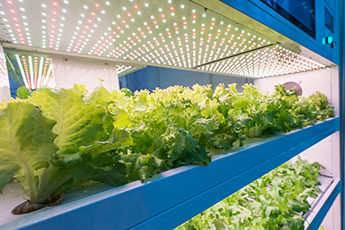 Vertical Farming Shipping Container